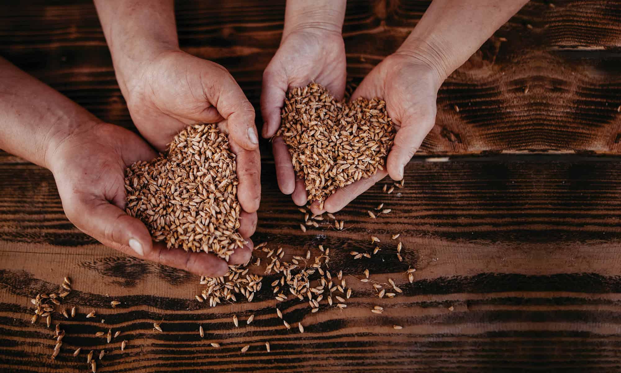 Der Keimlingsbäcker - Das Brot ohne Mehl